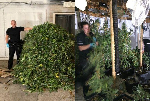 Cops seize large stash of cannabis found in warehouse in Basildon
