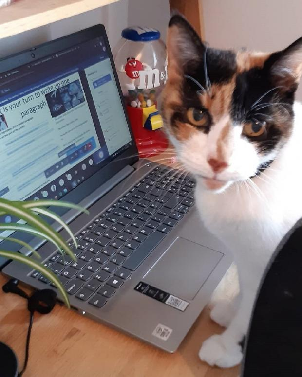 Braintree and Witham Times: Purrfect workmate - Joseph Bateman sent this picture of Tikkabilla, helping daughter Alexandra with her home schoolwork