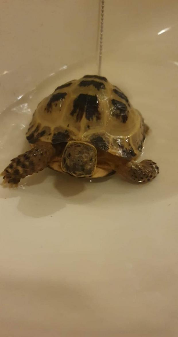 Braintree and Witham Times: Taking it easy - Rob and Gemma Binns shared these pictures of their pet tortoise