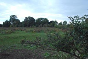 Braintree and Witham Times: Green belt land South of Melliker Lane, Hook Green