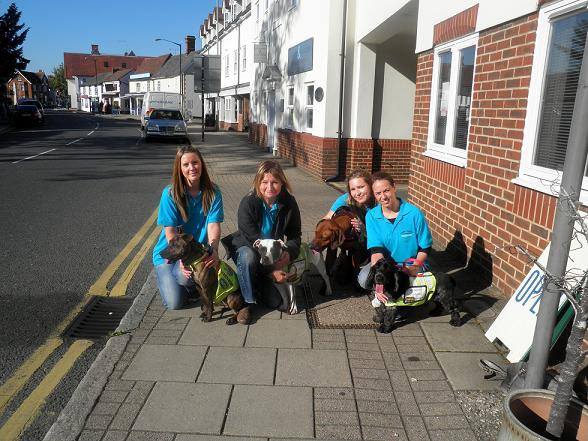 Danaher volunteers with some of the homeless dogs