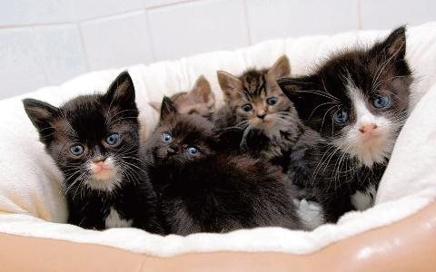 These kittens were abandoned on a vet's doorstep