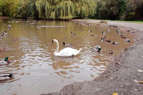 The swan escaped unharmed
