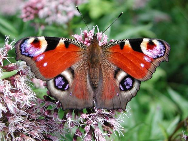 Braintree: Learn about British butterflies at exhibition