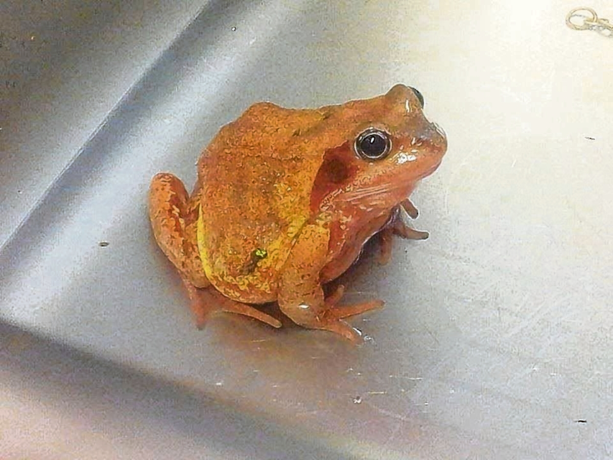 Witham sisters baffled by orange frog discovery