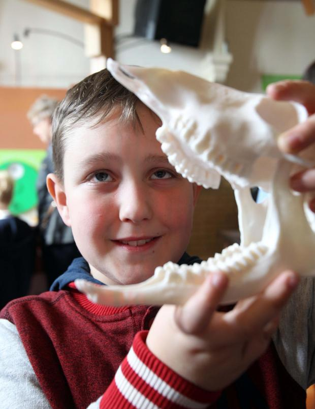 Braintree and Witham Times: Museum science and fossil day hailed a success