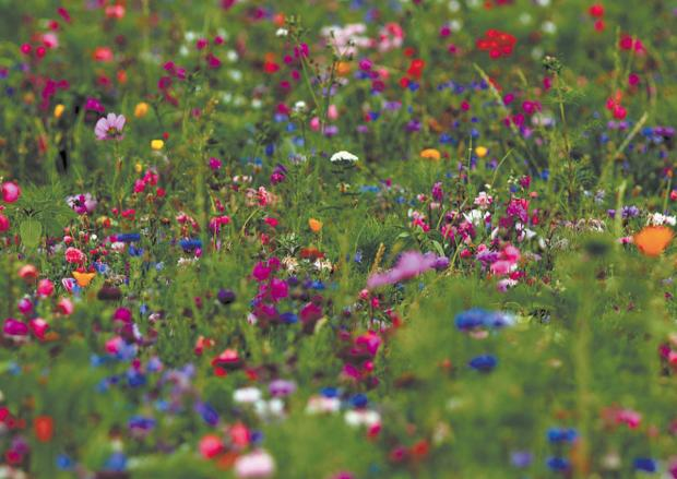 Enjoy Witham in Bloom's open garden event