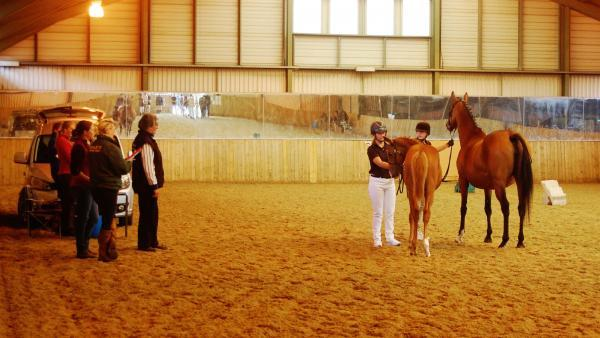 60 horses were put forward for evaluation at the event