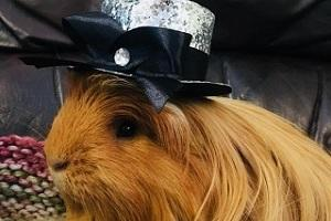 Pets don their Sunday best for Dress Up Your Pet Day